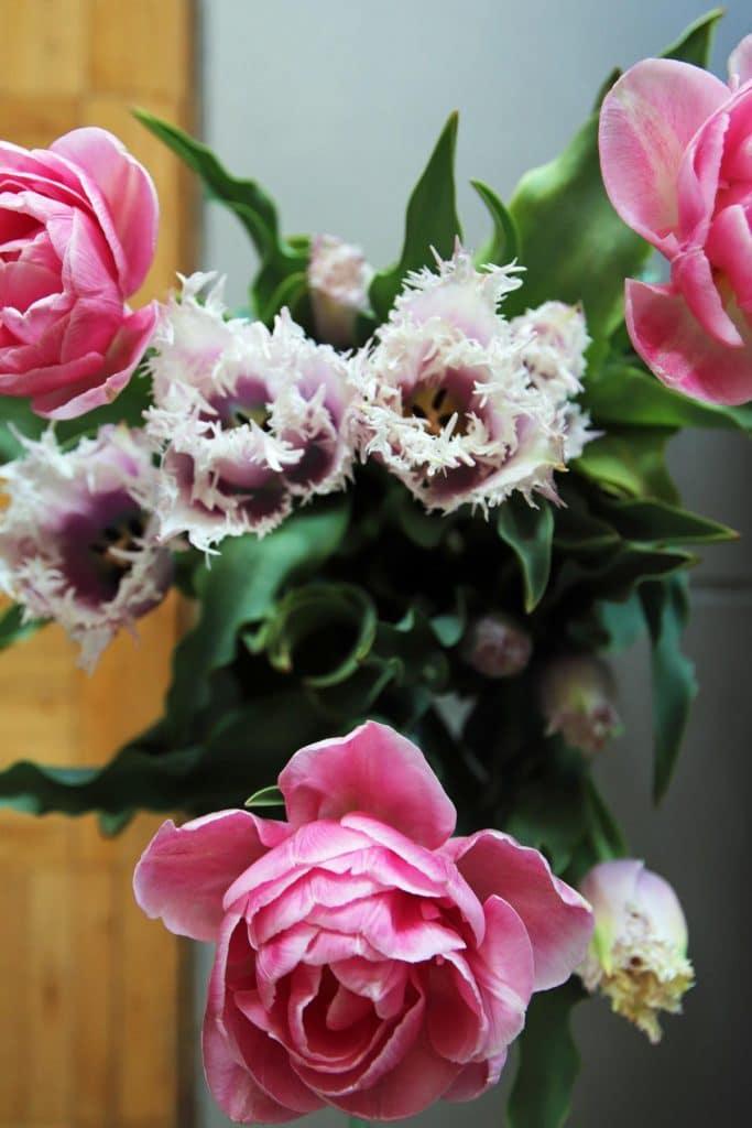 Tulpen in Rosatönen, z.T. mit Fransen, auffällig in der Form, als schöner Muttertagsstrauß. © Copyright Bettina Katscher 2020